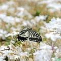 蝶の優雅な舞NO.4