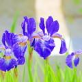 光明院の花々