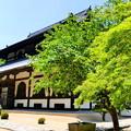 曹源寺の新緑NO.5