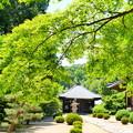 曹源寺の新緑NO.6