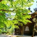 曹源寺の新緑NO.7