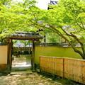 曹源寺の新緑NO.8