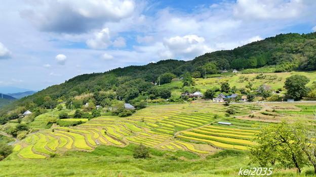 Photos: 上山の棚田