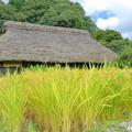 Photos: 里山の秋