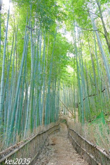 竹林の小道