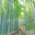 Photos: 竹林の小道