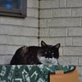 鹿沼の猫の親戚?