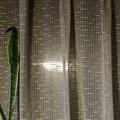 Photos: 食卓の窓に