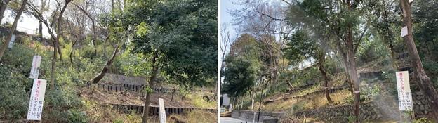 志村城(区立志村城山公園。板橋区)空堀跡