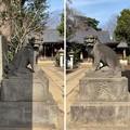 志村城(城山熊野神社。板橋区)狛犬