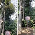 志村城(城山熊野神社。板橋区)境内