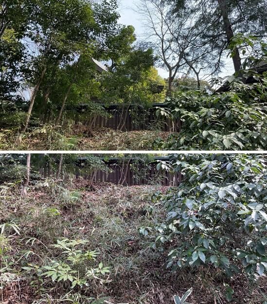 志村城(城山熊野神社。板橋区)空堀跡