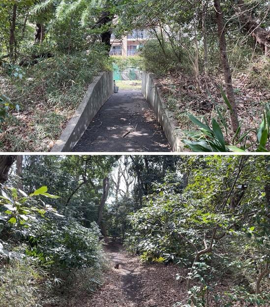 志村城(城山熊野神社。板橋区)?