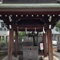 Photos: 洲崎神社(江東区)手水舎