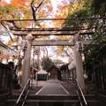 富岡八幡宮(江東区)六社