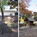 11.11.24.富岡八幡宮(江東区)六社