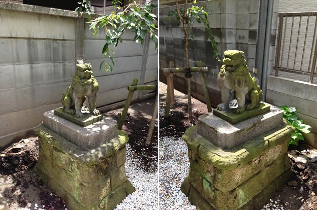 住吉神社(江東区牡丹)狛犬