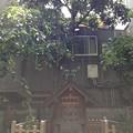 13.06.17.住吉神社(江東区牡丹)