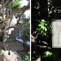 心行寺(江東区深川)宝篋印咒塔
