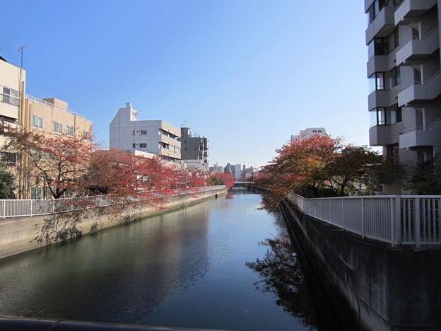 仙台堀川 海辺橋上より東(江東区清澄)