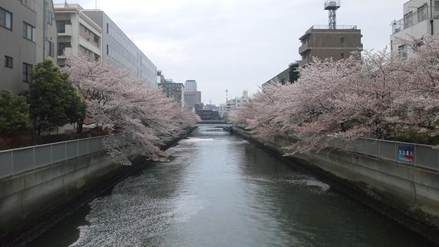 12.04.11.仙台堀川 海辺橋より西(江東区清澄)