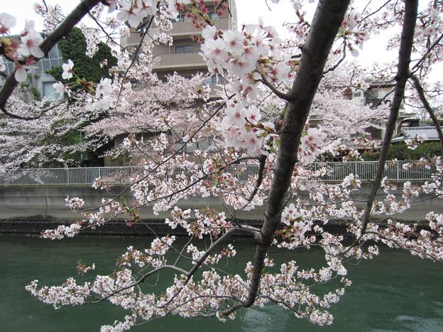 仙台堀川(江東区深川)芭蕉散歩道
