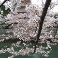 Photos: 仙台堀川(江東区深川)芭蕉散歩道