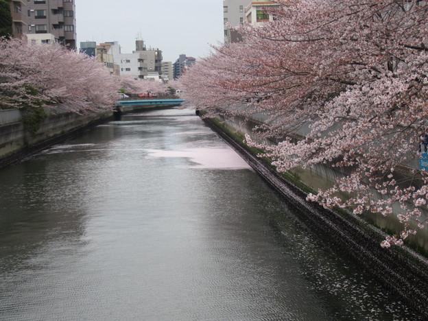 仙台堀川 清澄橋より東(江東区清澄)