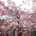 Photos: 清澄庭園 児童公園部分(江東区清澄)