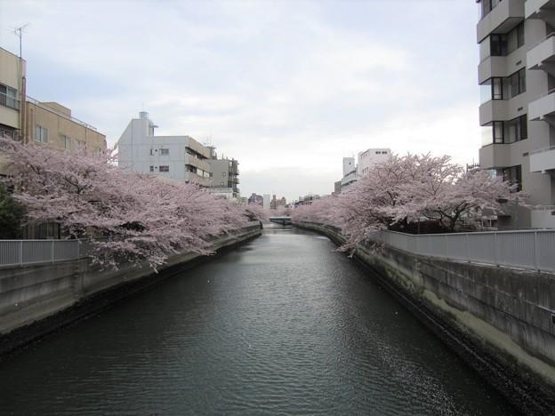 仙台堀川 海辺橋より東(江東区清澄)