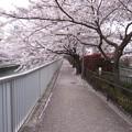 仙台堀川(江東区深川)