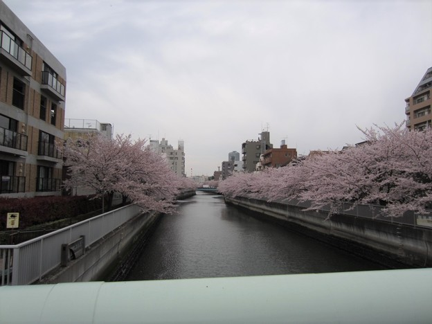 12.04.11.仙台堀川 木更木橋より西(江東区冬木)