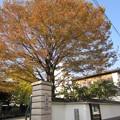 11.11.24.雲光院(江東区三好)