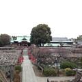 亀戸天神社(江東区亀戸)太鼓橋 男橋より