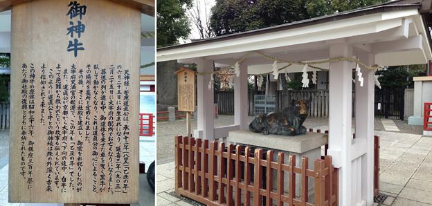 亀戸天神社(江東区亀戸)御神牛