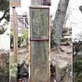 亀戸天神社(江東区亀戸)老松