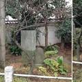 亀戸天神社(江東区亀戸)諸々