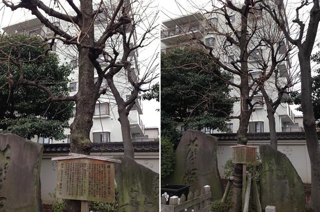 亀戸天神社(江東区亀戸)楷