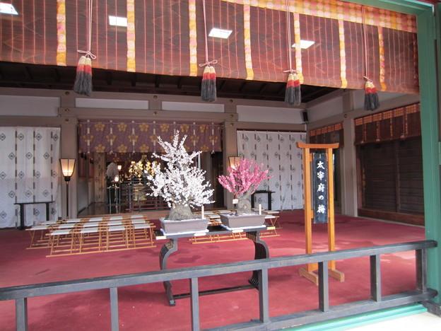 亀戸天神社(江東区亀戸)大宰府の梅
