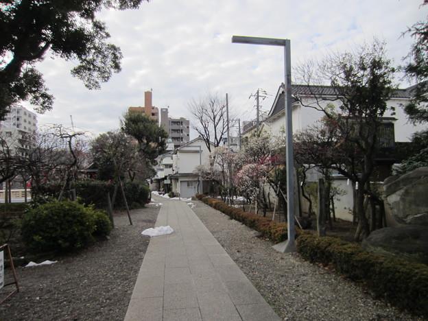 亀戸天神社(江東区亀戸)