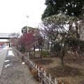 14.02.13.亀戸天神社(江東区亀戸)