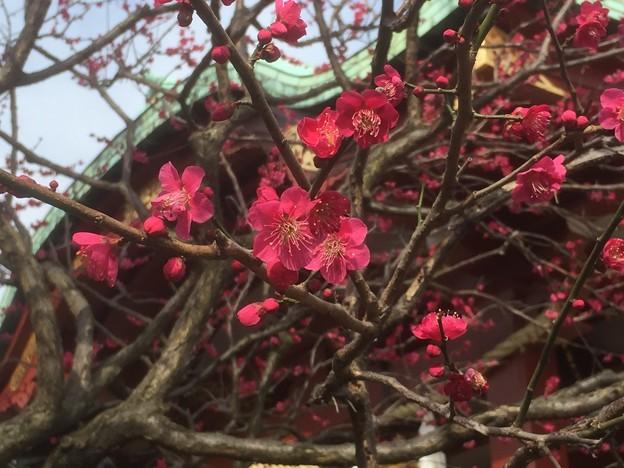 Photos: 亀戸天神社(江東区)