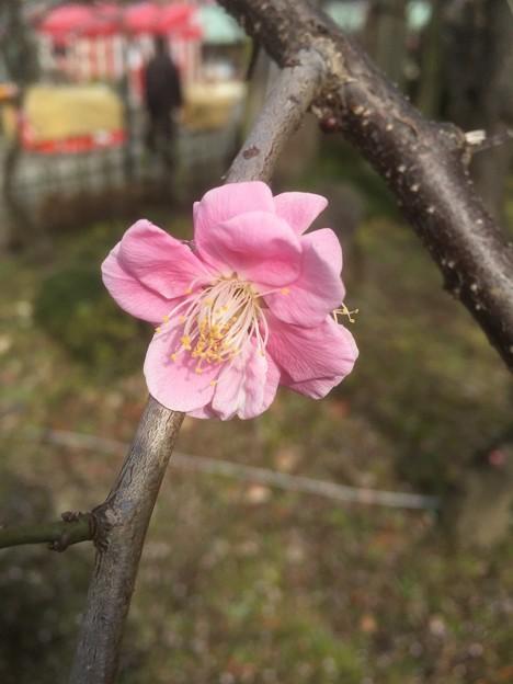 亀戸天神社(江東区)