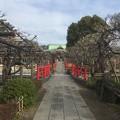 Photos: 16.02.25.亀戸天神社(江東区)