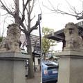 亀戸香取神社(江東区)狛犬