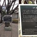 亀戸香取神社(江東区)亀戸大根之碑