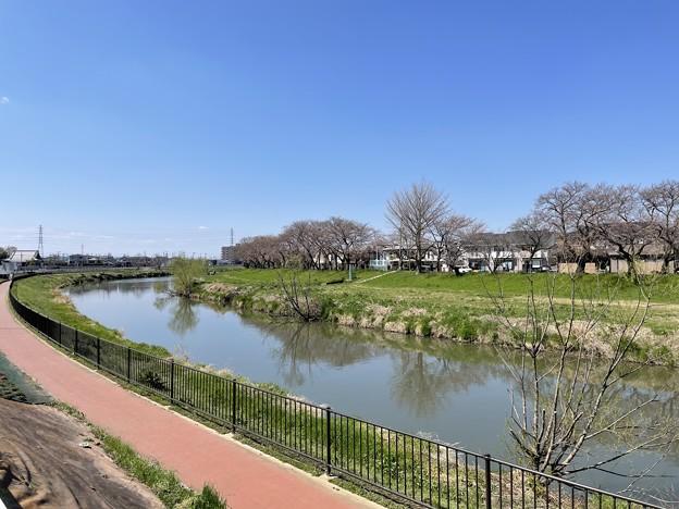 Photos: 和食と名代うなぎの新見世(越谷市)店前より元荒川