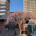 Photos: 21.03.14.善性寺(東日暮里)