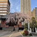 Photos: 21.03.17.善性寺(東日暮里)