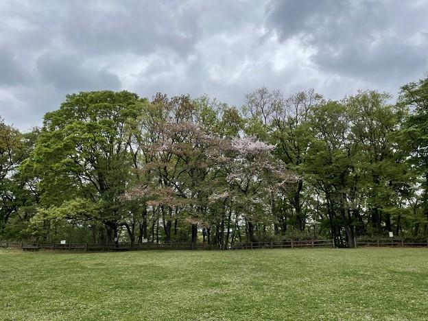 赤塚城本郭跡(板橋区)